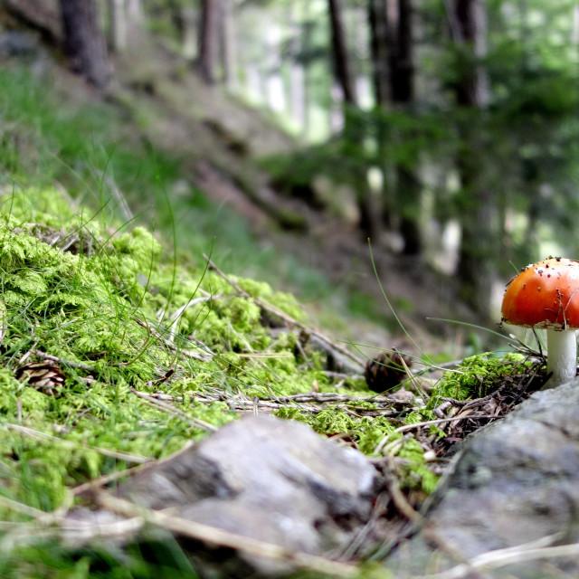 """""""Fairy Mushroom"""" stock image"""