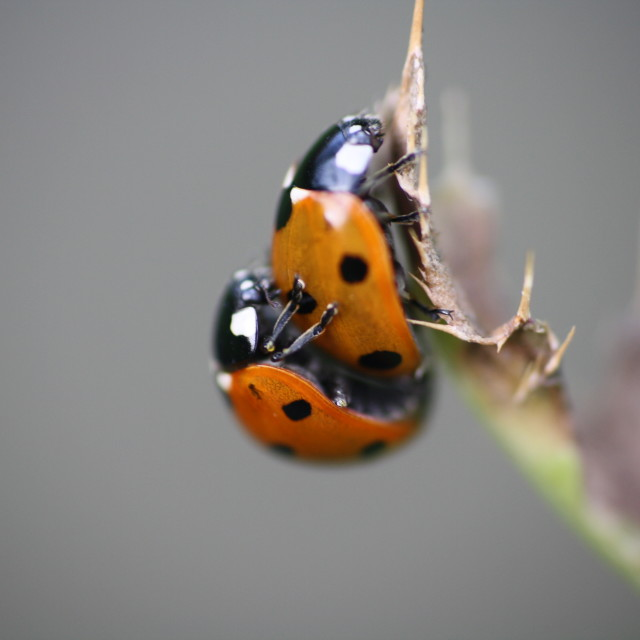 """ladybug love"" stock image"