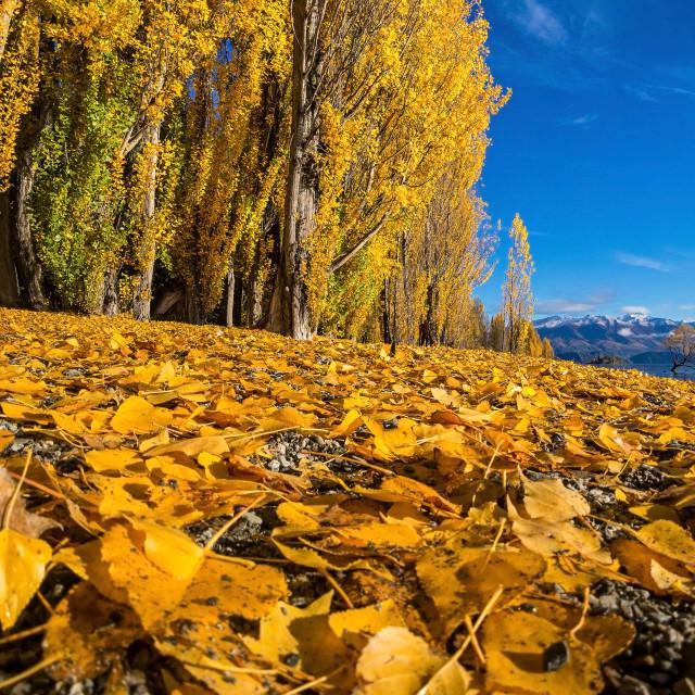 """Low angle view of the Autumn Season at Lake Wanaka, New Zealand."" stock image"
