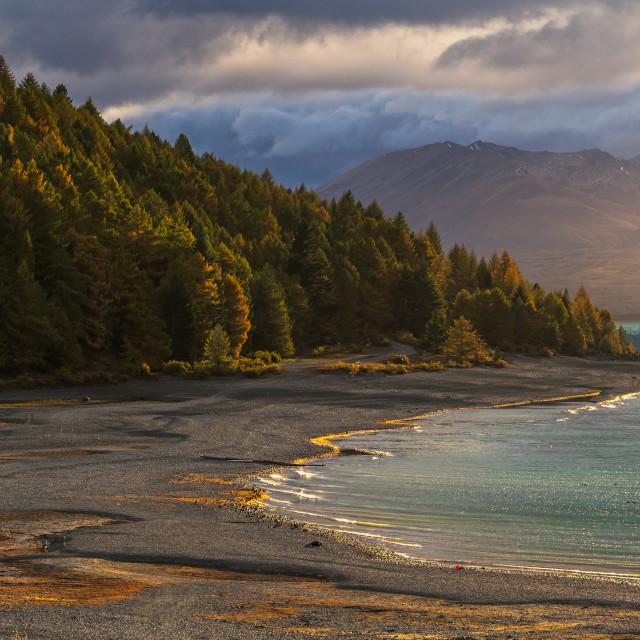 """Golden Sunlight at the shore of Lake Tekapo, New Zealand"" stock image"