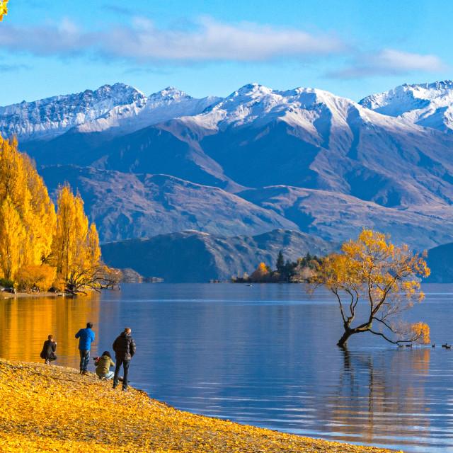 """Tourist visiting Lake Wanaka, New Zealand in Autumn season"" stock image"