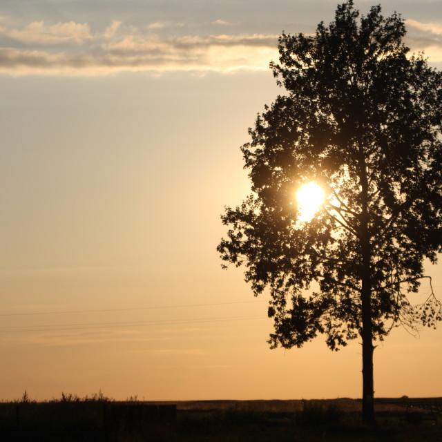 """Tree"" stock image"