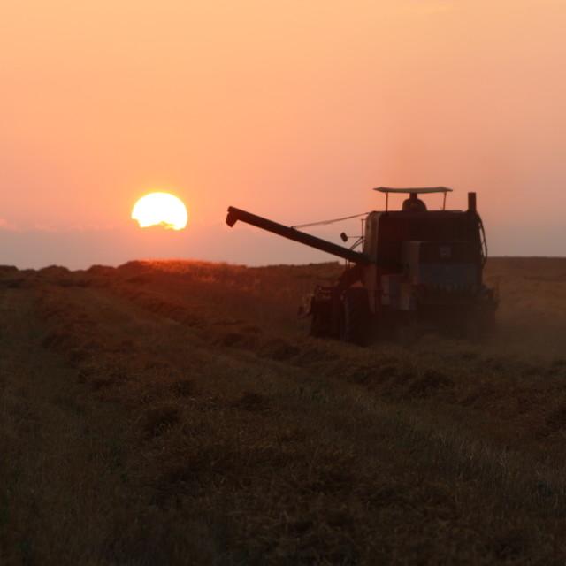 """Harvest on sunset"" stock image"