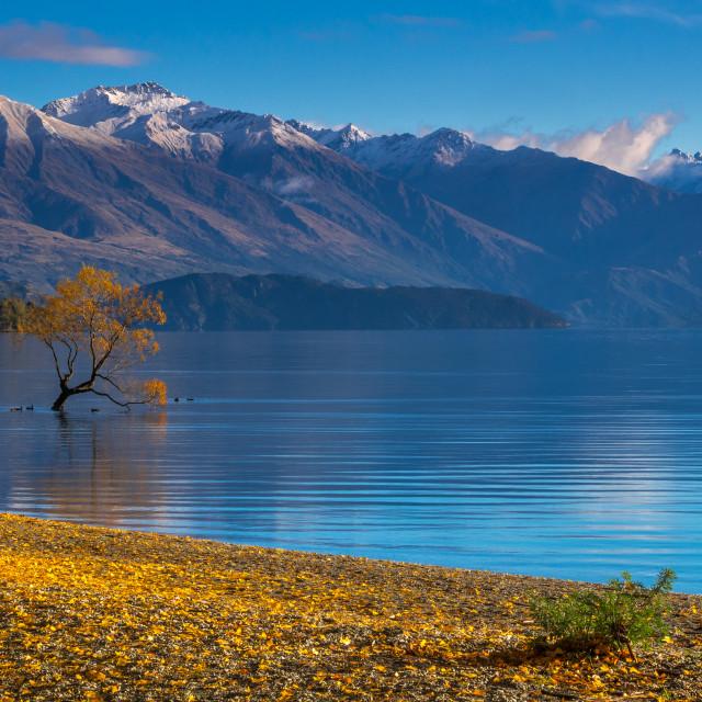 """Autumn view at Lake Wanaka, New Zealand."" stock image"