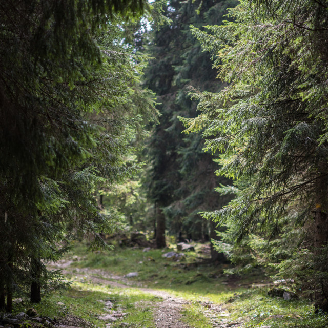 """Trail through the trees"" stock image"