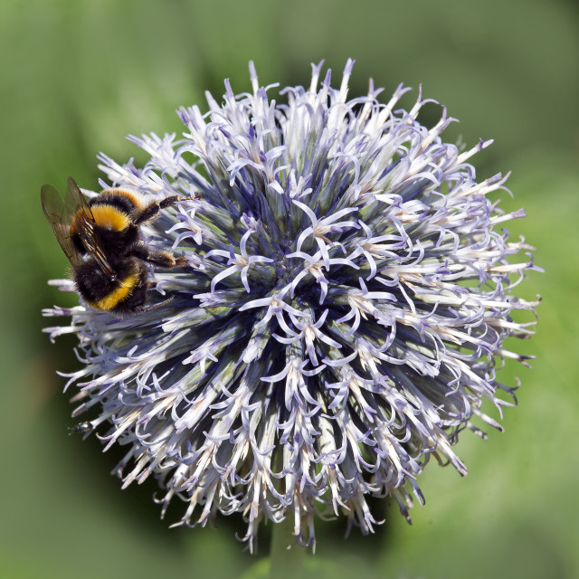 """""""Bee and the Sphere"""" stock image"""