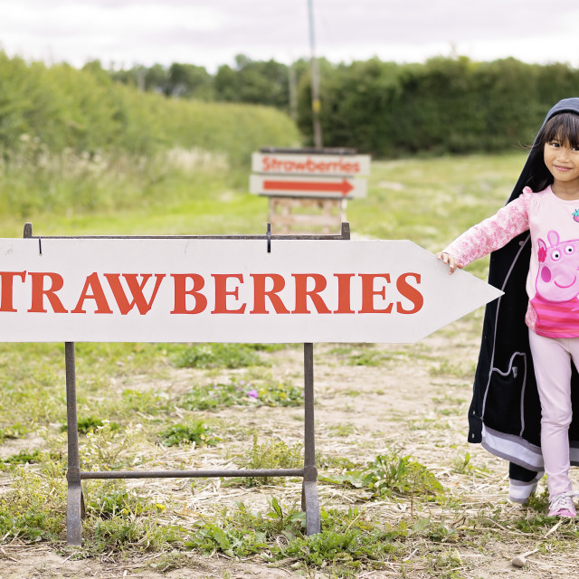 """Which way to the strawberry fields?"" stock image"