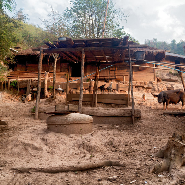 """Rural Wooden Village Hut with Animals, Laos"" stock image"