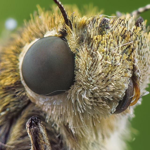"""Moth"" stock image"