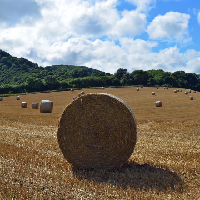 """Round hay bale."" stock image"