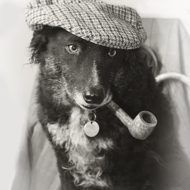 """""""Canine Old Timer"""" stock image"""