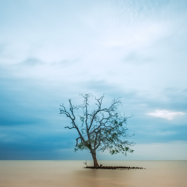 """""""Lone Tree in the middle of the ocean, long exposure"""" stock image"""