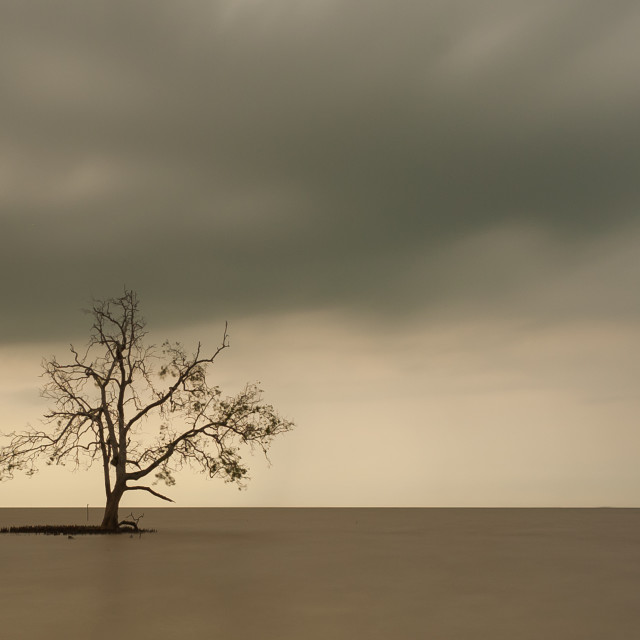 """""""Lone Tree in the middle of the ocean, long exposure during sunse"""" stock image"""