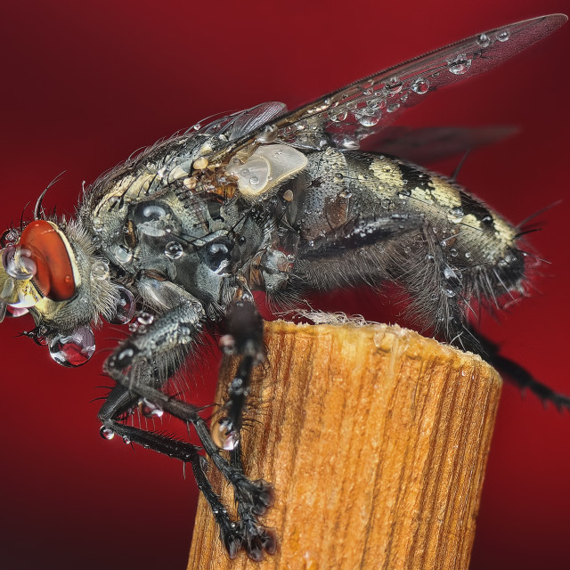 """""""wet fly"""" stock image"""