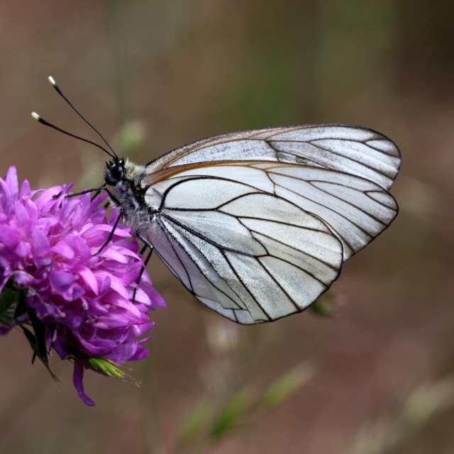 """Butterfly on a flower"" stock image"