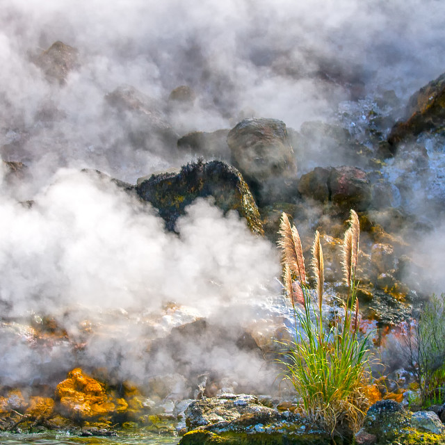 """""""Wild living earth in New Zealand"""" stock image"""