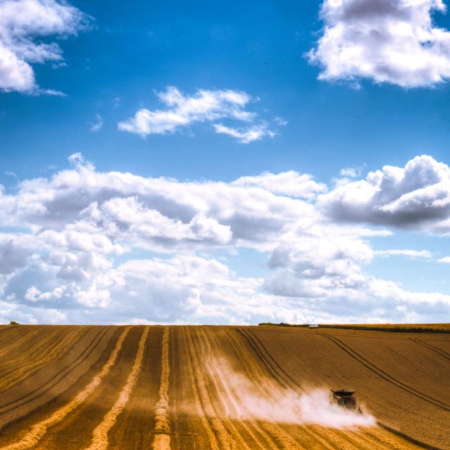 """Harvesting"" stock image"