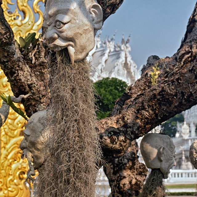 """Heads Hanging from Tree, White Temple, Thailand"" stock image"
