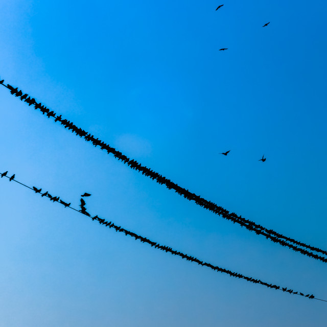"""Birds on a wire"" stock image"