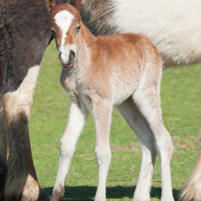 """new foal"" stock image"
