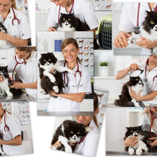 """""""Photo collage of a veterinary clinic"""" stock image"""