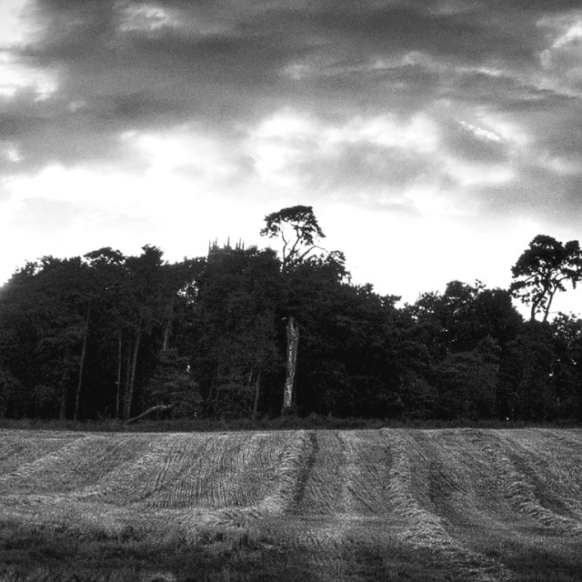 """Faringdon Folly copse"" stock image"