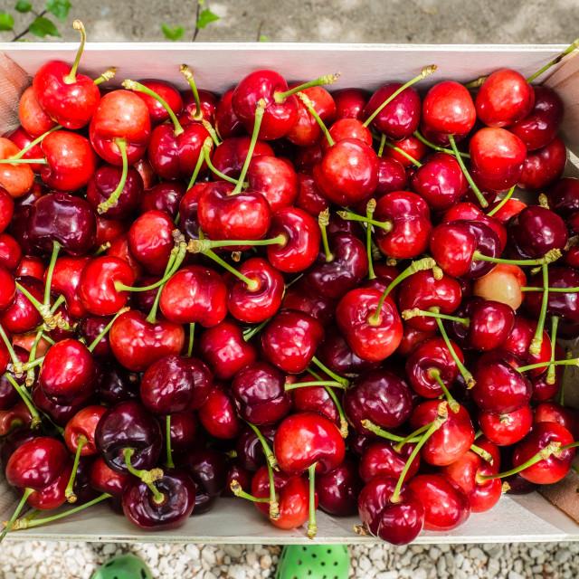 """""""Box of Cherries"""" stock image"""