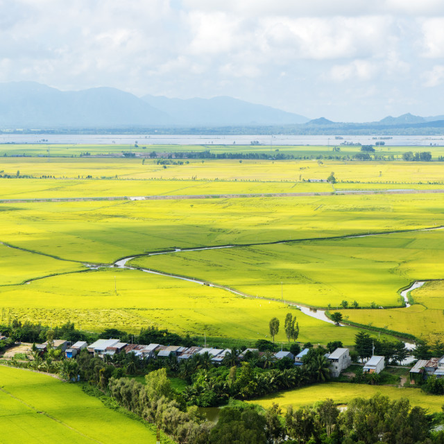 """Rice field at An Giang province"" stock image"