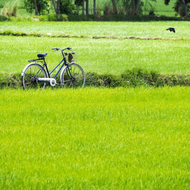 """Bike on green rice field"" stock image"