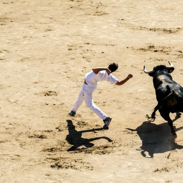 """Bull dance"" stock image"