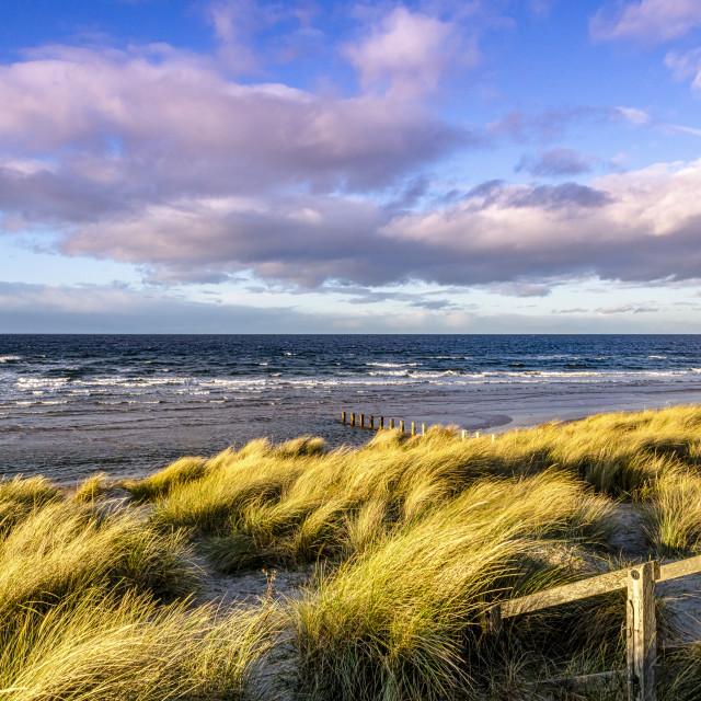 """Sand Dunes At Findhorn"" stock image"