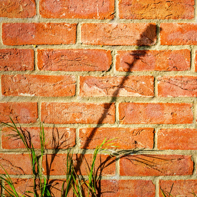 """Wallflower"" stock image"