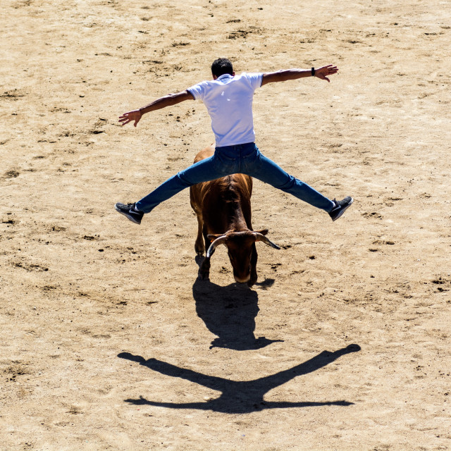 """Bull jumper"" stock image"
