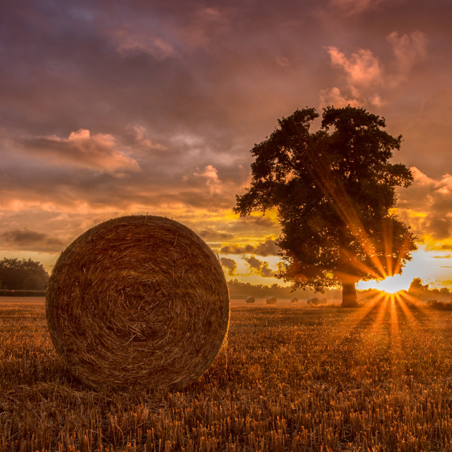 """A roll in the hay"" stock image"