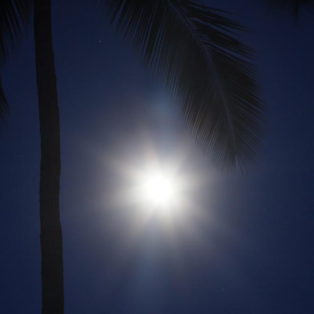 """Tropical moon"" stock image"