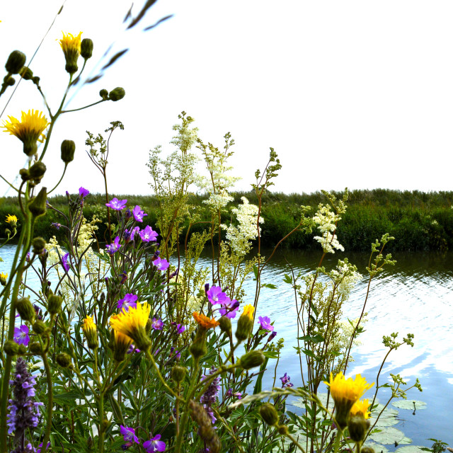"""Riverside flowers"" stock image"