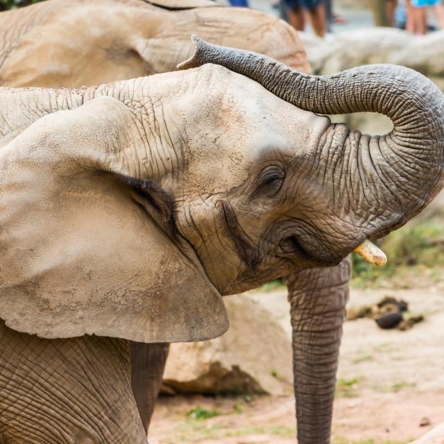 """Elephant Games"" stock image"