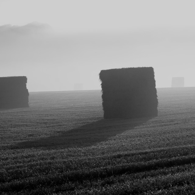"""Bales in a field"" stock image"