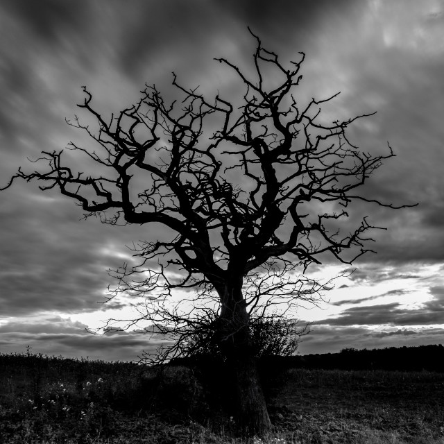 """Dead Tree"" stock image"