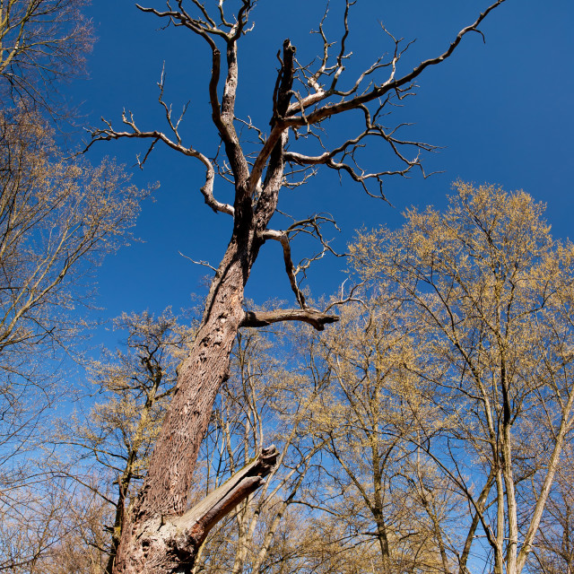 """""""Old dead trunk decayed tree"""" stock image"""
