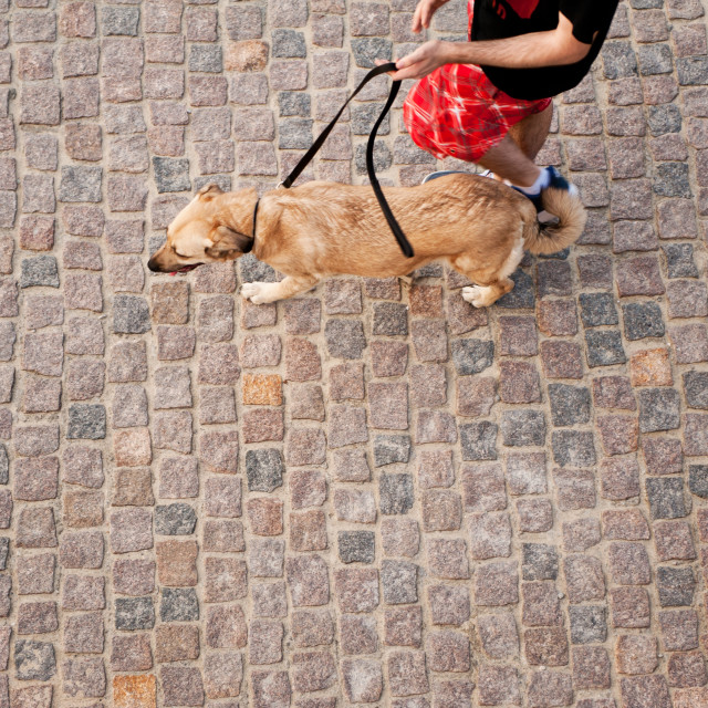 """Dog walking on cobblestones pavement"" stock image"