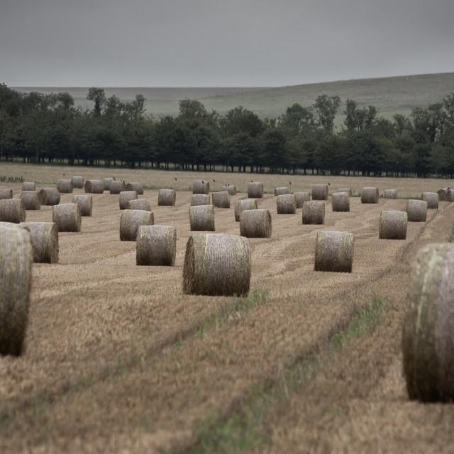 """Round Straw Bales Overcast"" stock image"