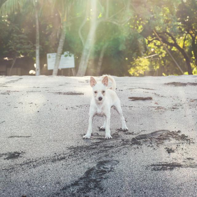 """the dog"" stock image"