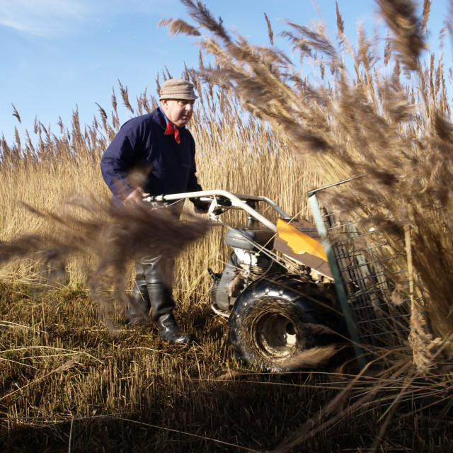 """The Norfolk reed cutter"" stock image"