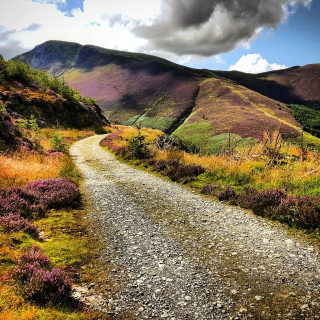 """""""Whinlatter Forest"""" stock image"""