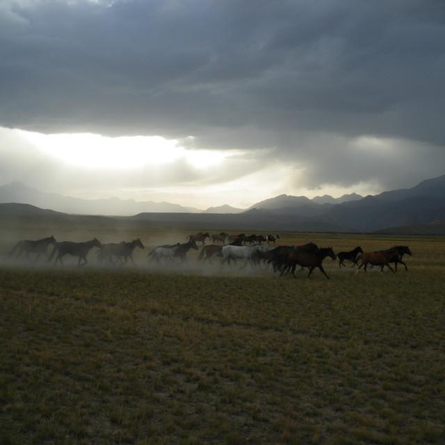 """Wild horses, Kyrgyzstan"" stock image"