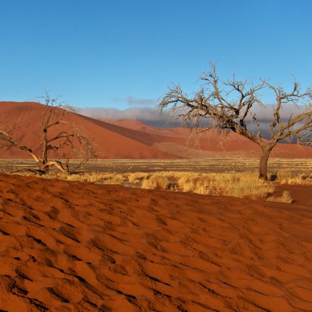 """Namibia desert Namib dunes and trees"" stock image"