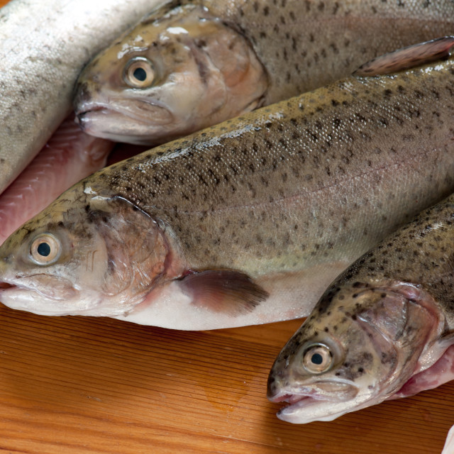 """Caught trouts fresh raw fish"" stock image"