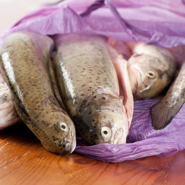 """Fresh caught trouts fish"" stock image"