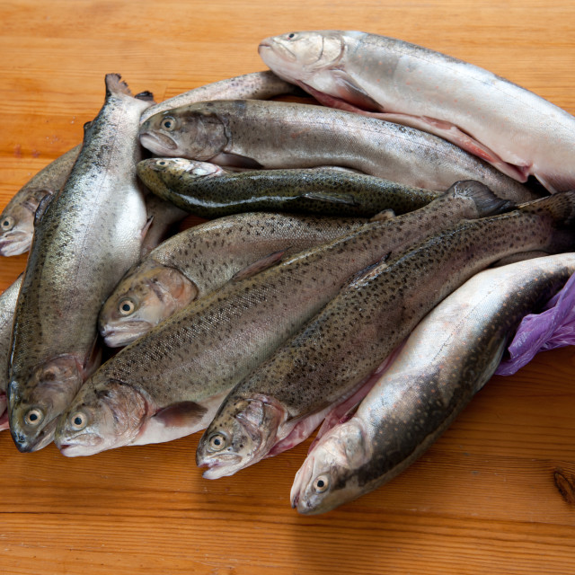 """Caught fresh trouts fish carcass"" stock image"
